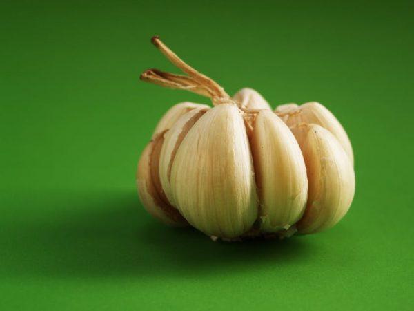 Garlic-ajo