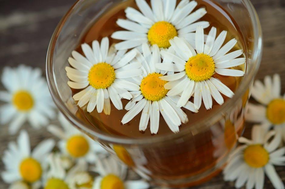 chamomile-medicinal-manzanilla