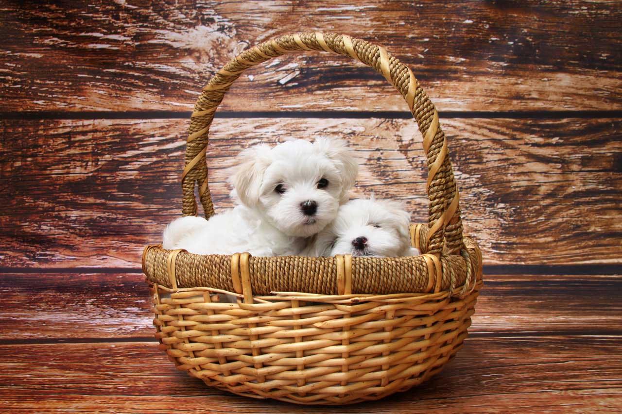 perro-dog