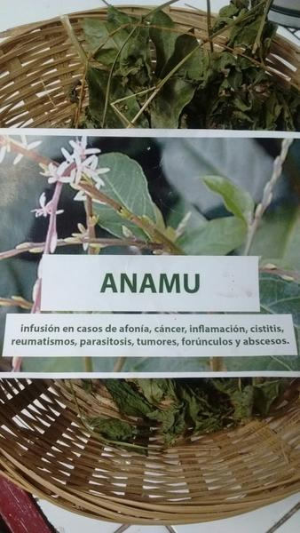 ANAMU petiveria alliacea